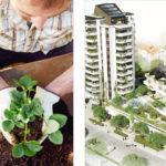 Systemlösningar för gröna anläggningar/tak – steg 2, fortsättning