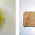 Mikrobiella skador i vattenskador