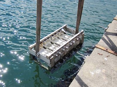 Självläkning av betongsprickor i havsmiljö