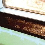 Regninläckage och dess mekanismer i fasader