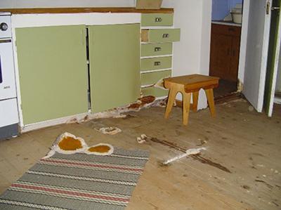 Åldersbestämning av äkta hussvamp