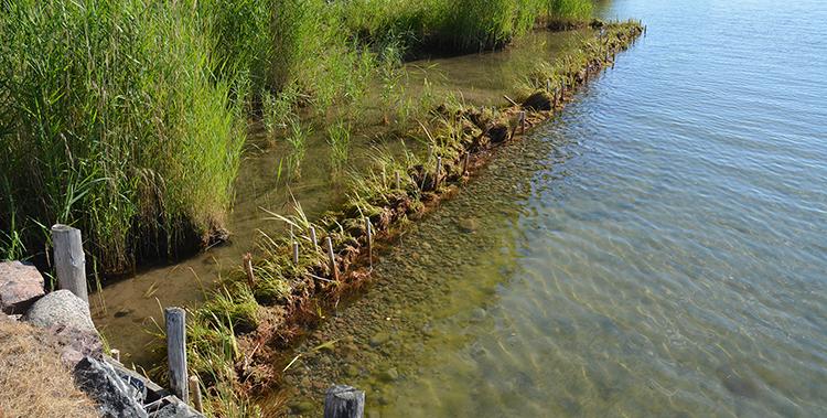 Naturbaserade lösningar mot stranderosion